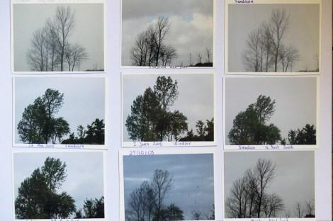 groupe d'arbres sur l'autoroute de Nord le ensemble de photos