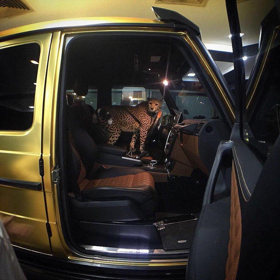 25-Years-Old Turki Bin Abdullah Fleet Of Luxury Gold Cars Worth Millions