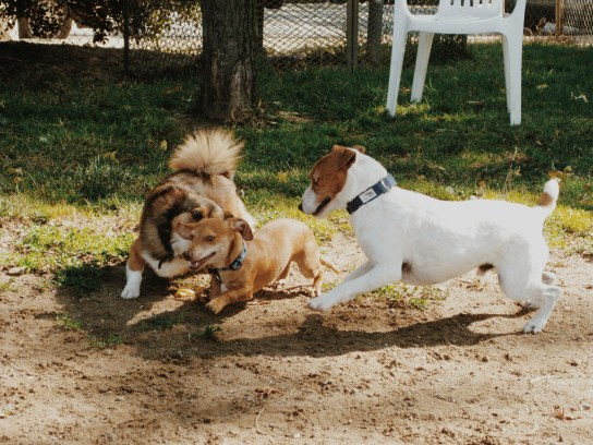 June 15th, 2011 - Mandu's first day at the dog park