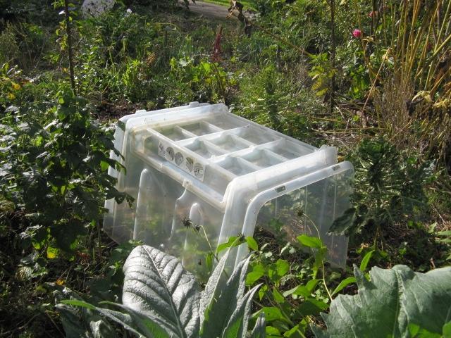 Meilleures serres à semis pour le jardin