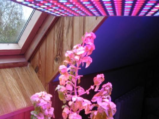 lampes à led pour plantes