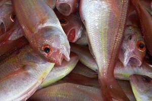 Onde comprar peixes no atacado | Distribuidoras e fornecedores de peixes congelados