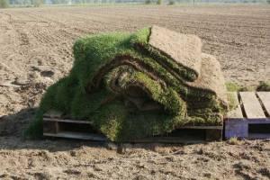 Plantar grama dá dinheiro? Como produzir grama em tapete?