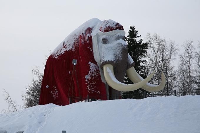 Среди достопримечательностей Салехарда – огромный мамонт на берегу Оби. На Новый год хоботное укутывают в попону, которую снимают с приходом весны