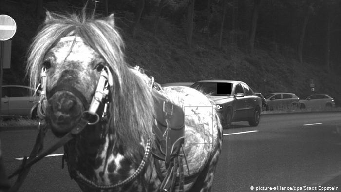 Лошадь на дороге