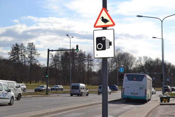 """Роль """"дикого животного"""" на дорожном знаке могут исполнять птицы."""