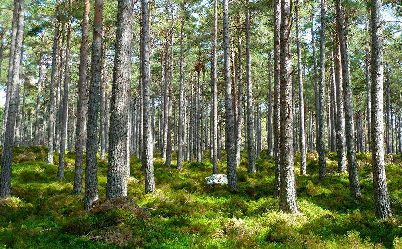 Image of trees in forest Image by Siggy Nowak from Pixabay