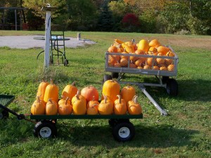 Autumn Orchard Harvest Pumpkins