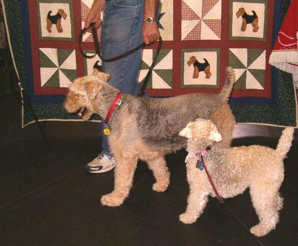Airedale for a Day! (5/6)