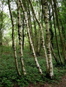 forêt7