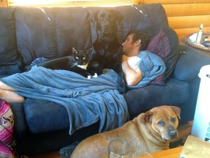 black dog and black cat