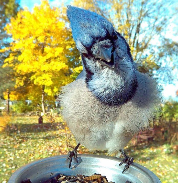 bird with hair