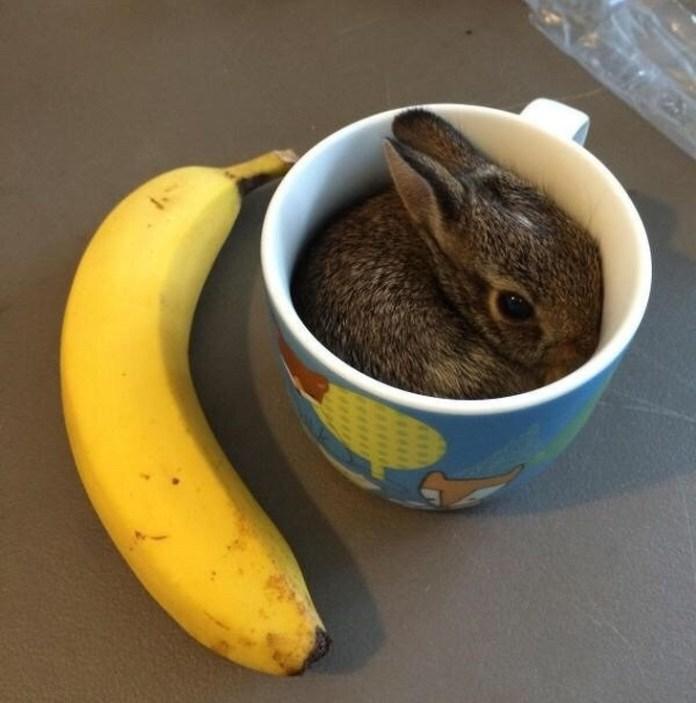 banna and tea cup bunny
