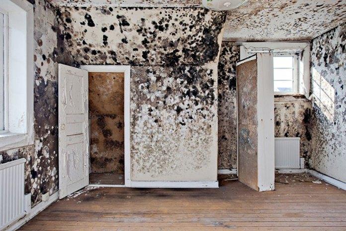 fungus filed walls