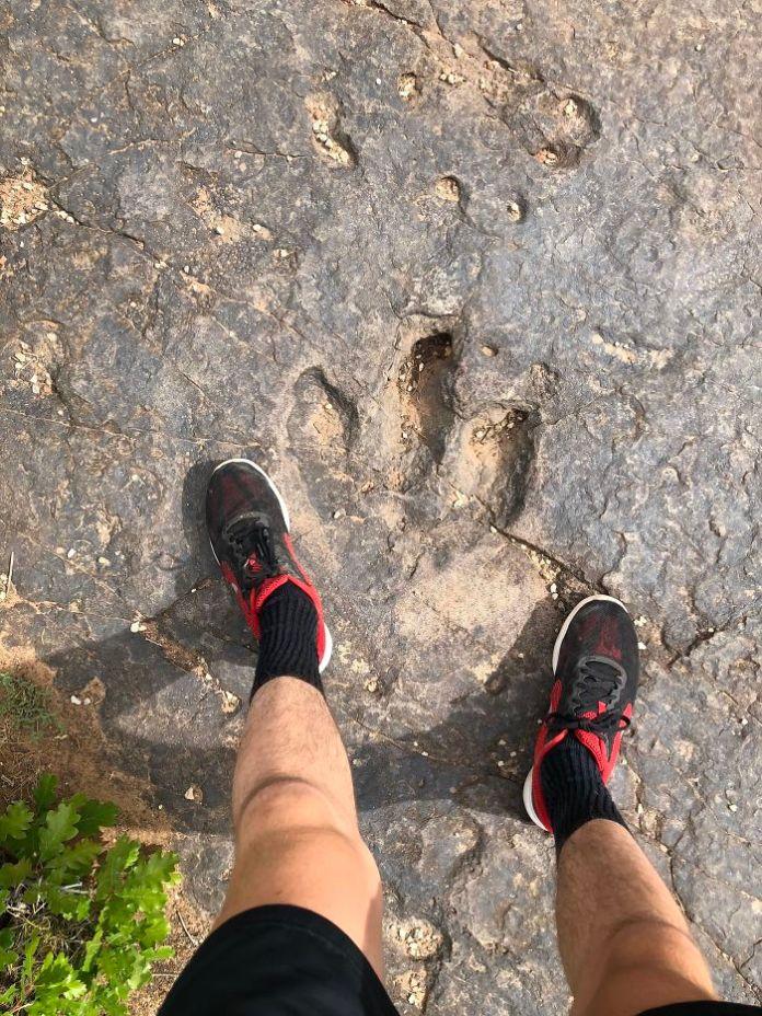 Fossilized Dinosaur Foot Print In Utah