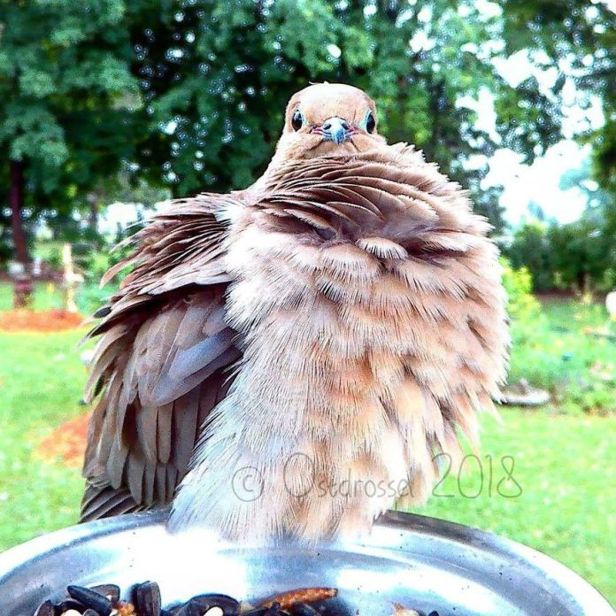 bird relaxses feathers