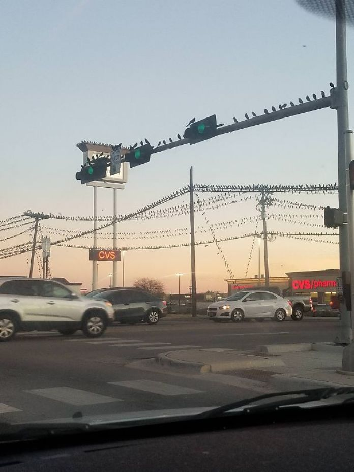 birds on powerlines
