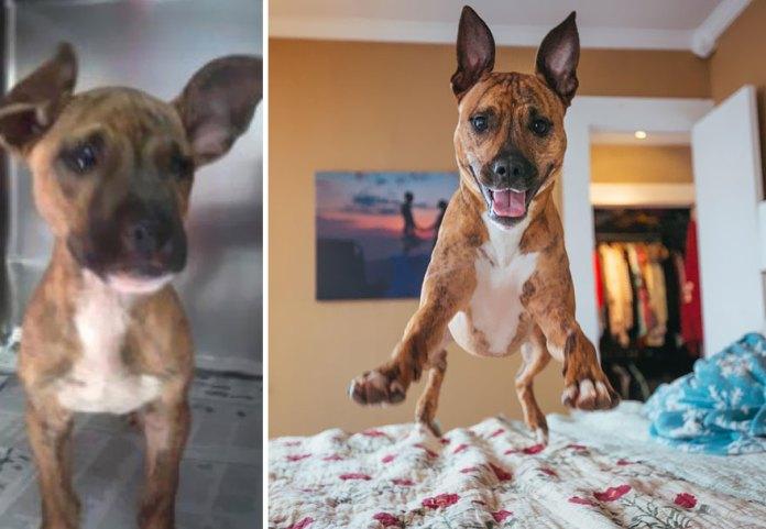 puppy and big dog