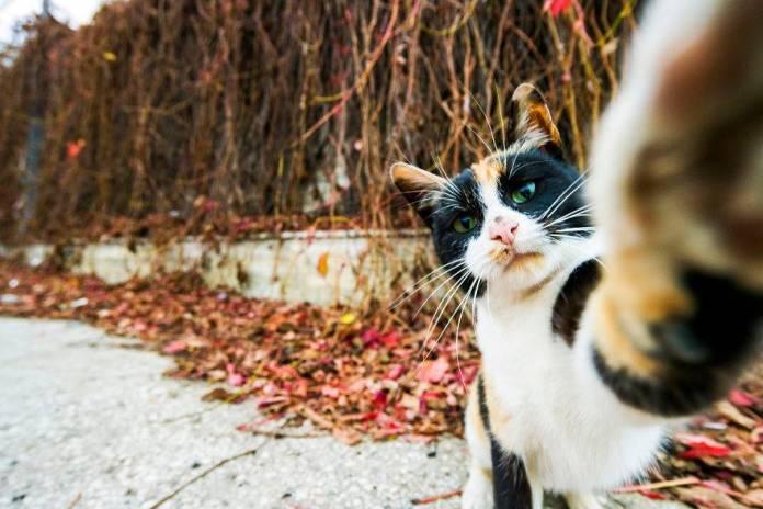 funny cat selfie