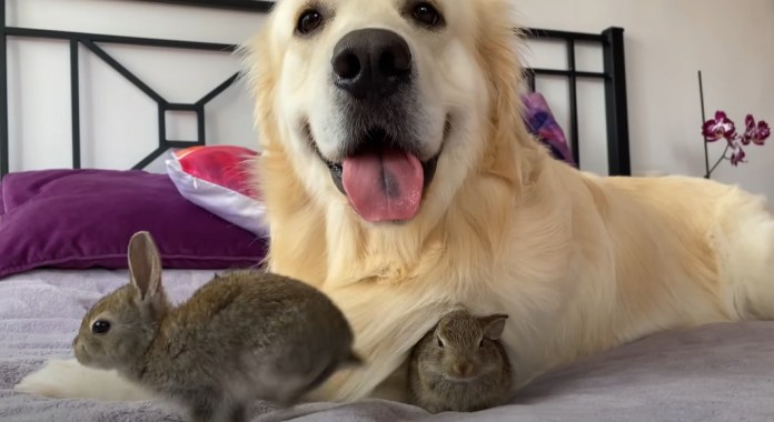 Bailey and the bunnies