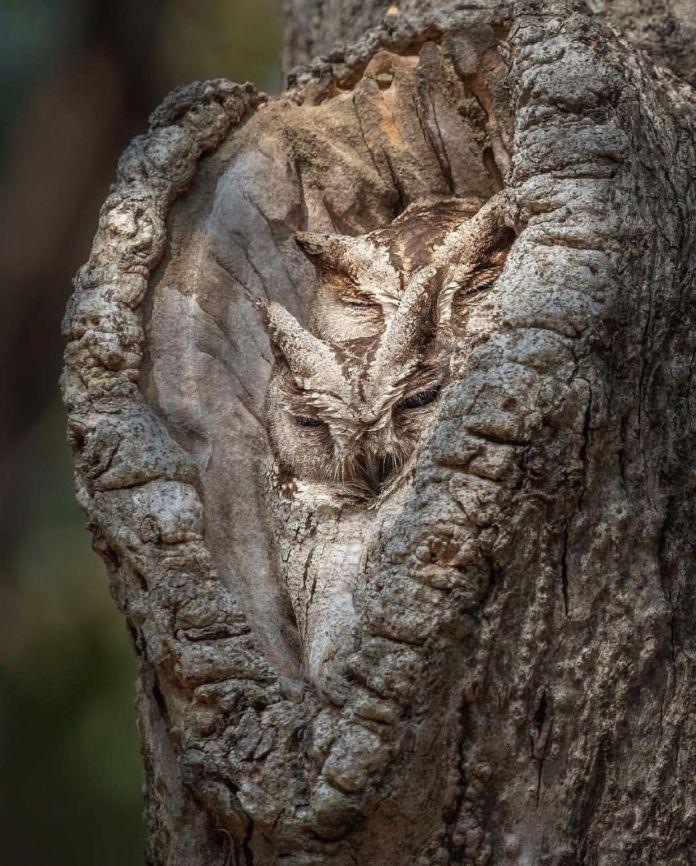 Embedding Camouflage