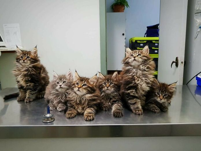 Cute Animals At The Vet