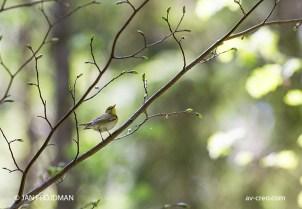 Bird_3969