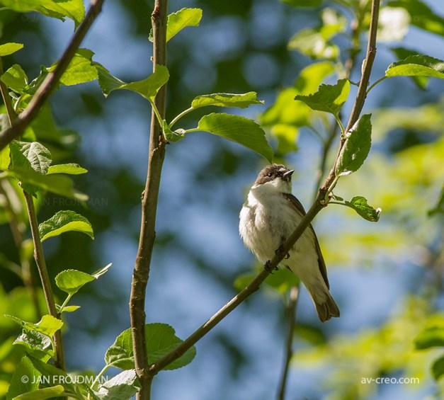 Bird_9196
