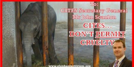 CITES - Revoke Zimbabwe Elephant Permits