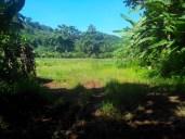 plateau des ananas punui (2)