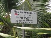 plateau des ananas puunui (2) (Copier)