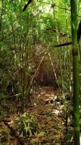 bambouseraie 1