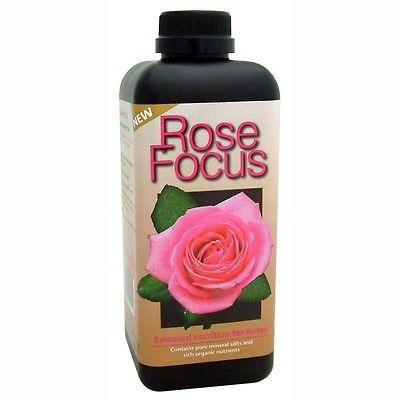 Rose Focus