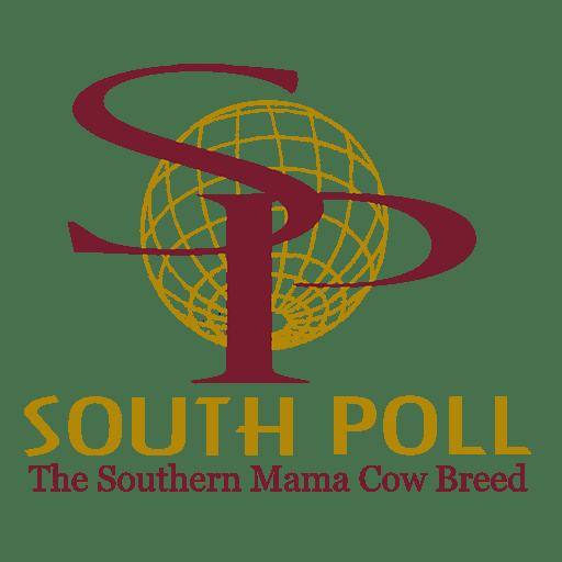South Poll Grass Cattle Association | WordPress Website Design by Avalon Web Designs