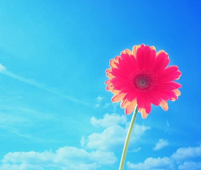 Blue Flowers Hd Desktop Wallpaper Widescreen High Definition X