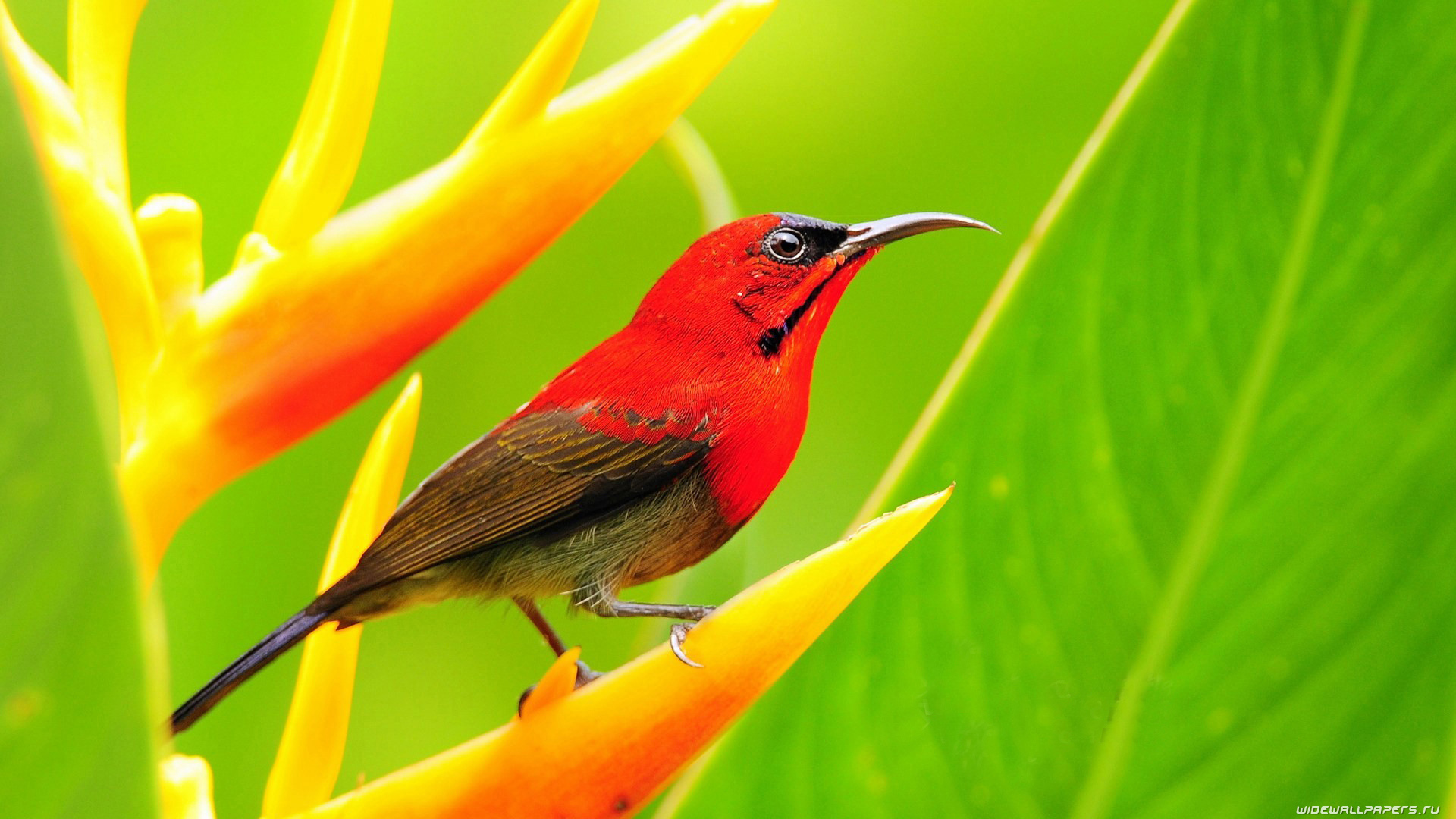 picture of bird wallpapers (42 wallpapers) – adorable wallpapers