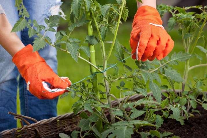 Gardening tie-ups