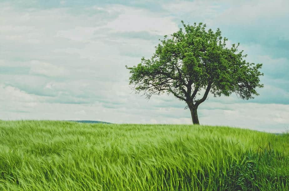 Here Are 40 Types of Trees You Should Know