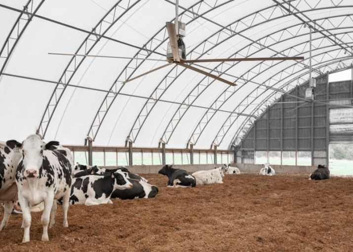 Agricultural Ceiling Fans