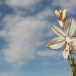 Excursión Minica de los Colores y Casica el Guardia…flor a flor