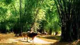 Làng cổ Phong Nam