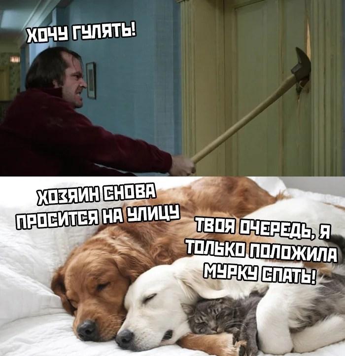 «Мемы про коронавирус 👑 🦠» — карточка от пользователя ...