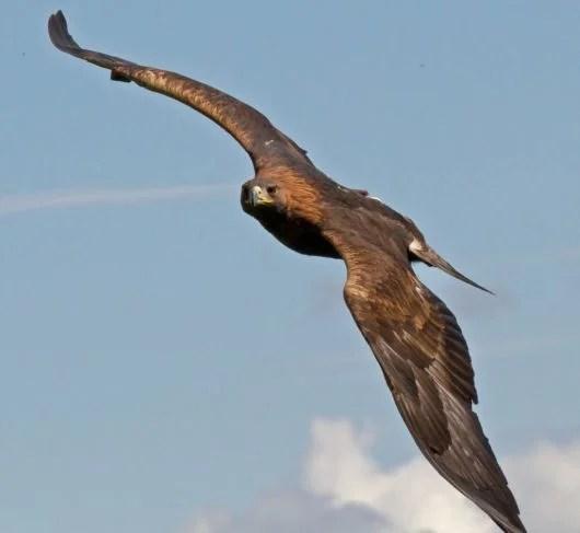 «Орел в свободном полете. Фото.» — карточка пользователя ...