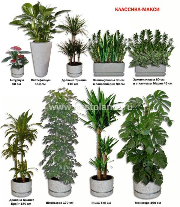 Комнатные Растения Популярные Названия И Фото