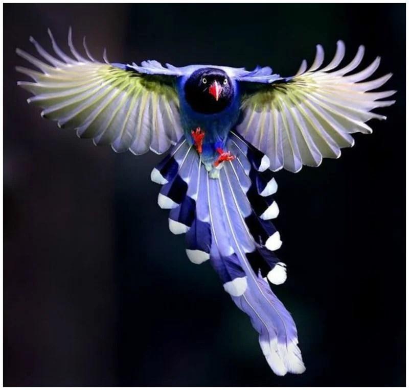 «ФОТО-ИСКУССТВО. КРАСОТА ПОЛЕТА ПТИЦ Птицы - красивы и ...