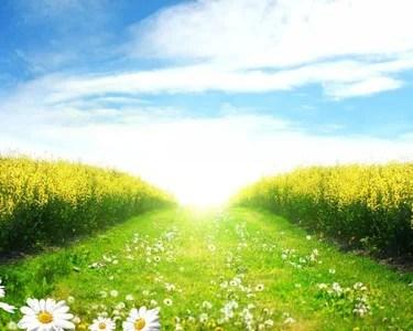 40 карточек в коллекции «Фото природы: солнечное лето ...