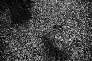 bn_naturaleza_hojas_09
