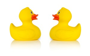 Rubber ducks facing one another