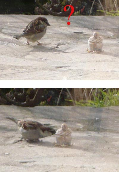boule-de-graisse-forme-cupcake-oiseaux.jpg