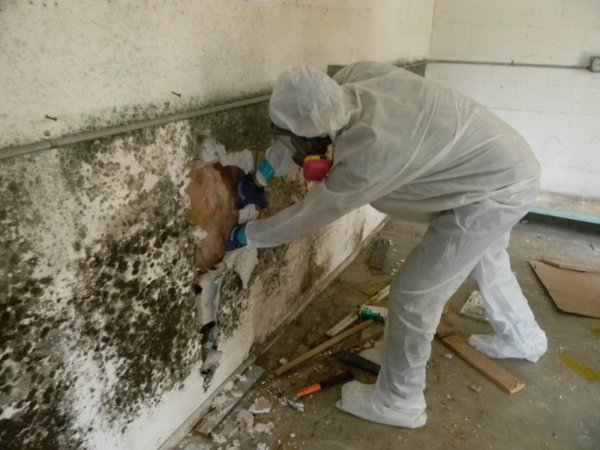 Mold-Removal-A